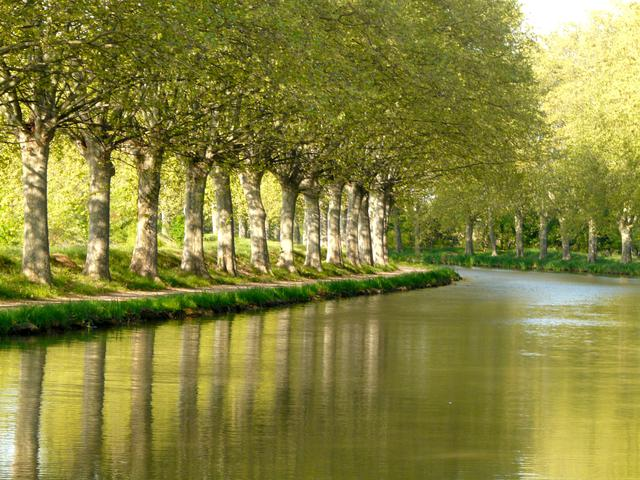 Canal du Midi lined by plane trees